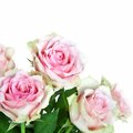 Bouquet of pink roses, isolated Royalty Free Stock Image