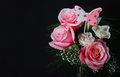 Bouquet of pink roses over black background with space for the text Stock Photo