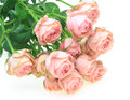 Bouquet of pink roses pictured a in a white background Stock Images
