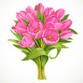 Bouquet of pink tulips isolated on a white background Royalty Free Stock Photography