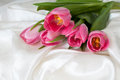 Bouquet pink tulips white silk Royalty Free Stock Image