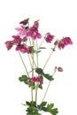 Bouquet Of Purple Flowers Colu...