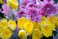 Bouquet in purple and yellow mum Royalty Free Stock Image