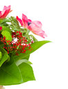 Bouquet with red anemone flowers Royalty Free Stock Image