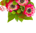 Bouquet of red anemone flowers isolated on white background Royalty Free Stock Image
