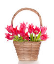 Bouquet red pink tulips Stock Photos