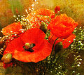Bouquet of red poppies on grunge stained colorful background Royalty Free Stock Photo