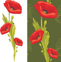 Bouquet of red poppies illustration Stock Images