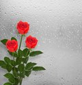 Bouquet of red roses on the background a window with raindrops Royalty Free Stock Image