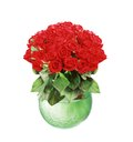 Bouquet of red roses in glass vase isolated on white Royalty Free Stock Photos