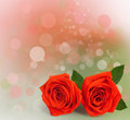 Bouquet of red roses with green leaves on the abstract background bokeh effect Royalty Free Stock Photography
