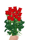Bouquet  of red roses in hand closeup isolated on white Royalty Free Stock Photo