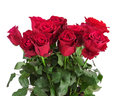 Bouquet from red roses isolated on white background closeup Royalty Free Stock Photo