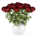 Bouquet of red roses in vase isolated on white Royalty Free Stock Image
