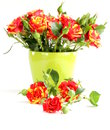 Bouquet of red roses on a white background Royalty Free Stock Photos