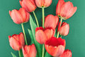 Bouquet of red tulips on a green background. Spring flowers. Royalty Free Stock Photo