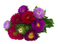 Bouquet of red and violet aster flowers isolated on white background Royalty Free Stock Photography