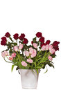 Bouquet of roses and tulips Royalty Free Stock Images