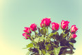 A bouquet of roses in vintage style Stock Photos