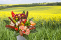 Bouquet with sausages a yellow field Stock Photography