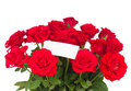 Bouquet of scarlet roses with tag isolated on white background Stock Image