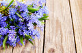Bouquet scilla blue spring flowers scylla on table Stock Photos
