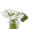 Bouquet of snowdrop flowers in basket isolated on white Royalty Free Stock Images