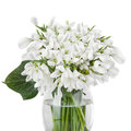 Bouquet of snowdrop flowers in basket isolated on white Stock Images