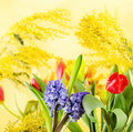 Bouquet spring flowers mimosa Royalty Free Stock Images