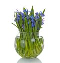 Bouquet of spring flowers in vase a isolated on white Stock Photography