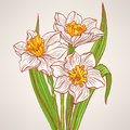 Bouquet with spring narcissus beautiful color hand drawn Stock Images