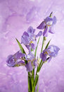 Bouquet of spring purple irises on abstract painting background Royalty Free Stock Images