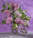 Bouquet of spring purple lilac in a vase soft focus it is photographed through glass Stock Image