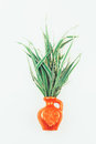 A bouquet of striped decorativel grass phalaris in a ceramic jug Royalty Free Stock Photo