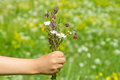 Bouquet of summer wildflowers in a child's hand Royalty Free Stock Photo