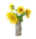 Bouquet of sunflower in a vase on a light background Royalty Free Stock Photo