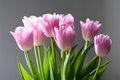 Bouquet of tulips front view on gray background Stock Photos