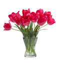 Bouquet of tulips in glass vase isolated on white background Royalty Free Stock Photo
