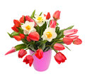 Bouquet of tulips and narcissus Stock Images