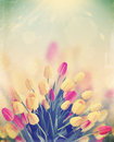 Bouquet of tulips,vintage Stock Images