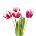 Bouquet of tulips on white background isoated Royalty Free Stock Photography