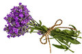 Bouquet of violet wild lavender flowers in dewdrops and tied wit Royalty Free Stock Photo