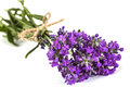 Bouquet of violet wild lavender flowers, tied with bow, isolated Royalty Free Stock Photo