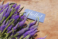 Bouquet of violet wild summer flowers and the blue card with the inscription Hello! Royalty Free Stock Photo