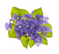 Bouquet of violets Stock Photos