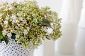 Bouquet of white flowers in vase Royalty Free Stock Photo