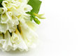 Bouquet of white freesias a landscape cut space for text on the right Royalty Free Stock Images