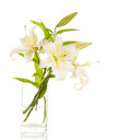 Bouquet of white lilies in glass vase isolated on background Stock Photography