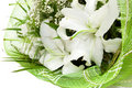 Bouquet of white lilies in green textile Stock Photos
