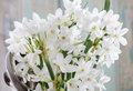 Bouquet of white narcissus Royalty Free Stock Photo